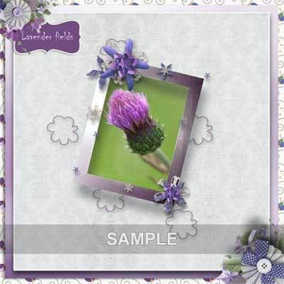 Bds_lavenderfields_pv_qp4