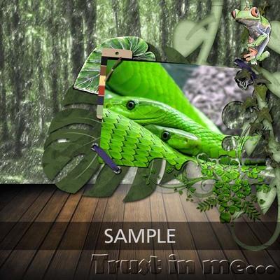 Cab_rainforest_collection_lo02_copy