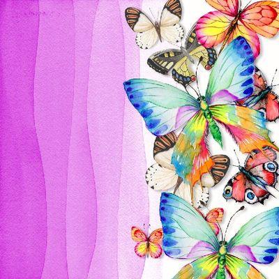 Butterfly_photobook_2-026