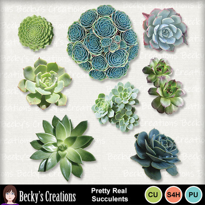 Pretty_real_succulents