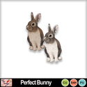Perfect_bunny_preview_small