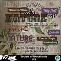 Patsscrap_secrets_of_broceliande_pv_wa_small