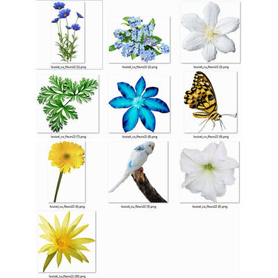 Fleurs22
