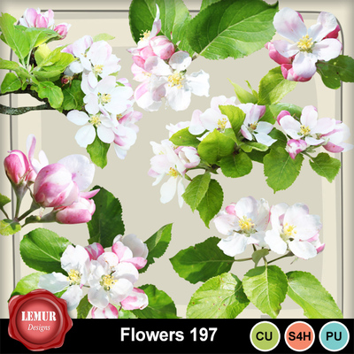 Flowers197