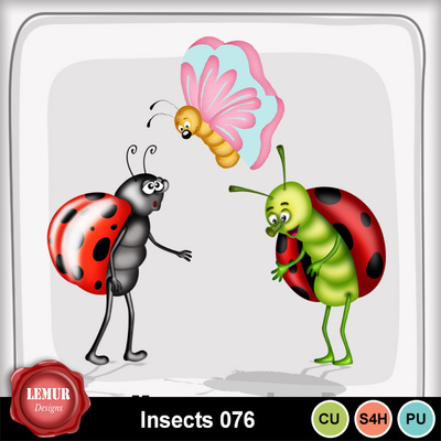 Insects076