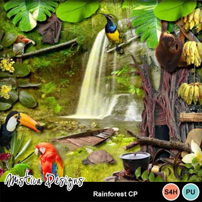Rainforest_cp