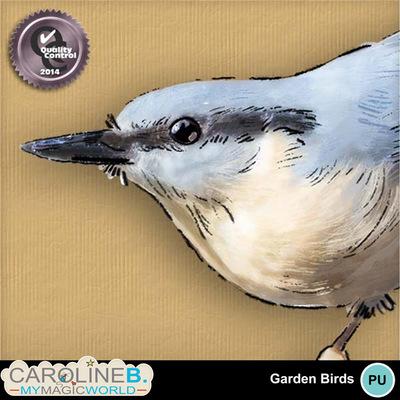 Garden-birds_3