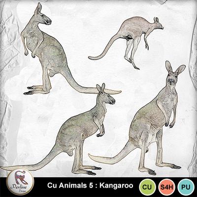 Pv_kangaroo