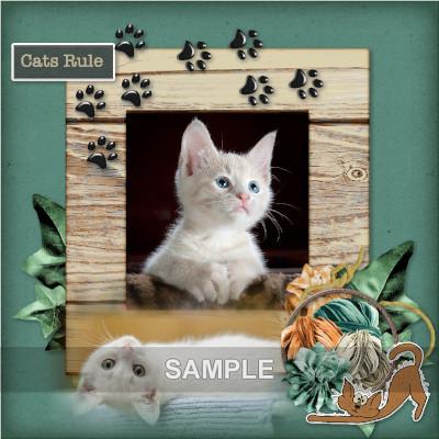 Sample_catitude_1