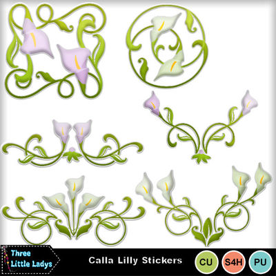 Calla_lily_-tll