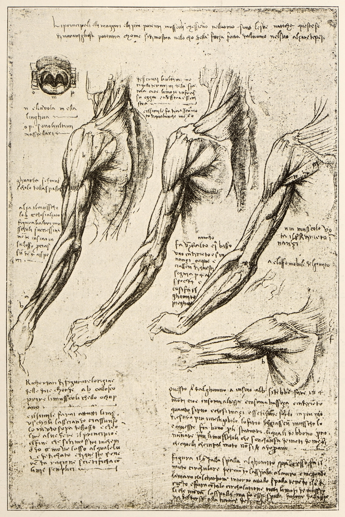 Leonardos Sketches and Drawings Anatomy Arm Muscles Art Print Poster ...