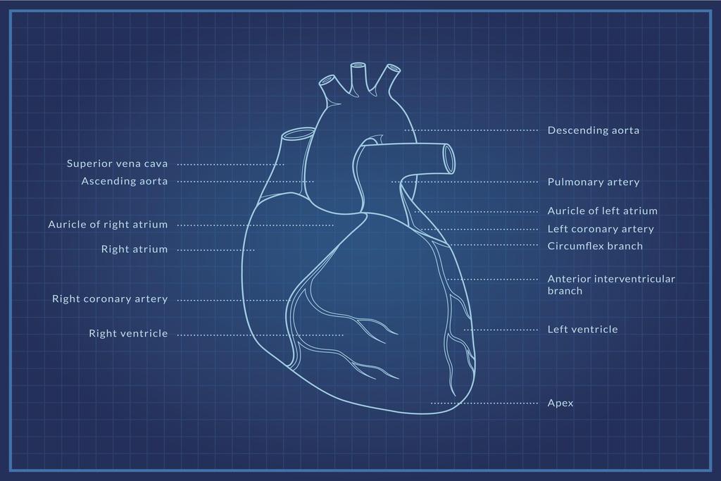 Human Heart Blueprint Diagram Educational Chart Poster ...