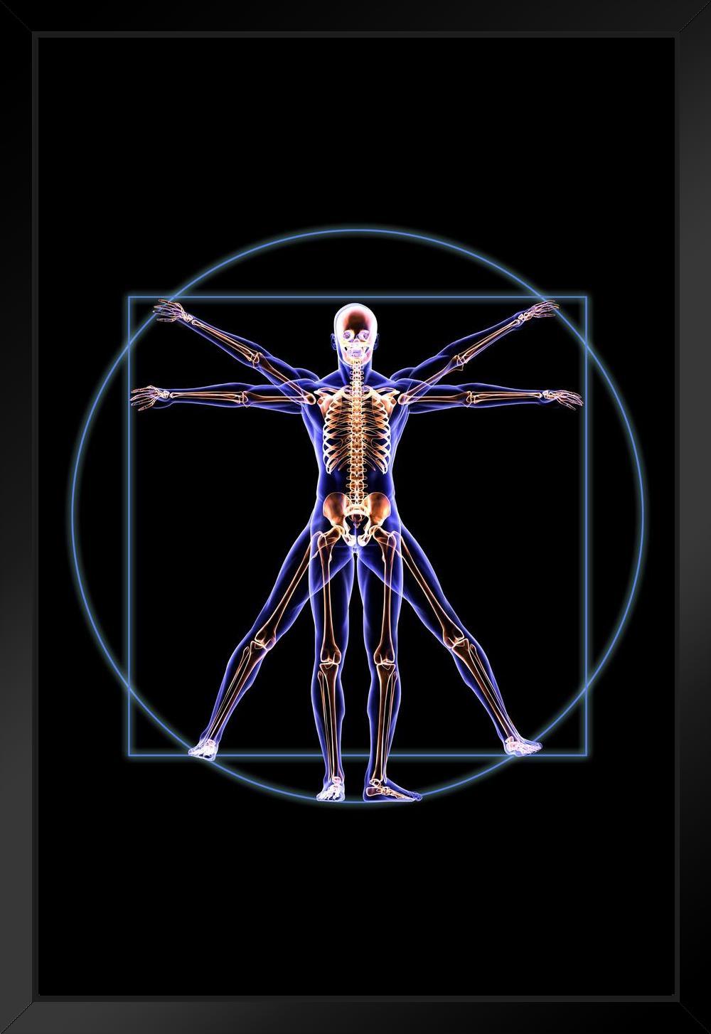 Vitruvian Man Skeleton Anatomy X Ray Photo By Proframes Framed