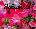 satsuki.company