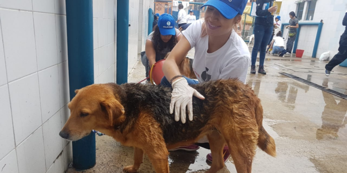 Voluntario del Instituto de Protección y Bienestar Animal