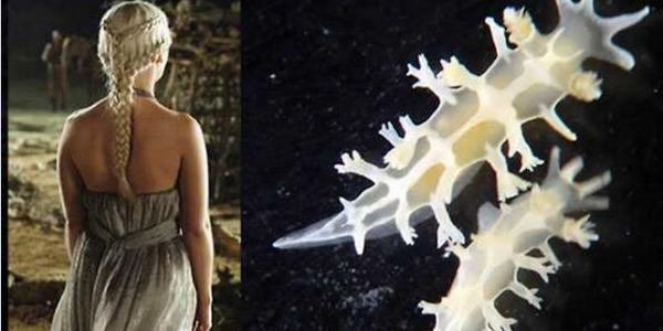 Bautizan a babosa marina en honor a un personaje de 'Game of Thrones'