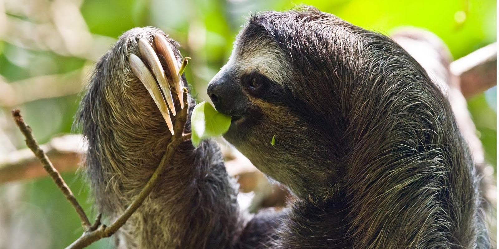 Huánuco: Policía rescató animales silvestres en peligro de extinción