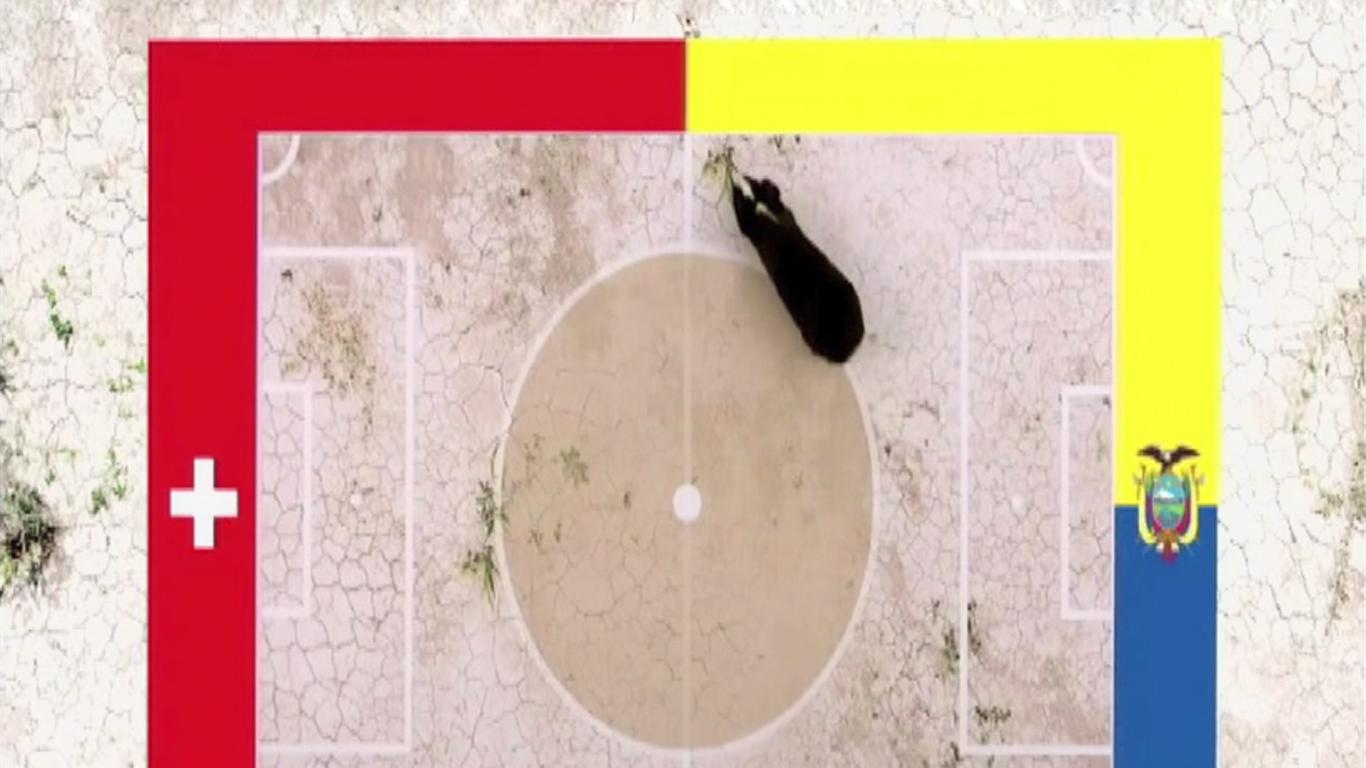Conoce al cuy adivino que pronosticó el triunfo de Suiza sobre Ecuador