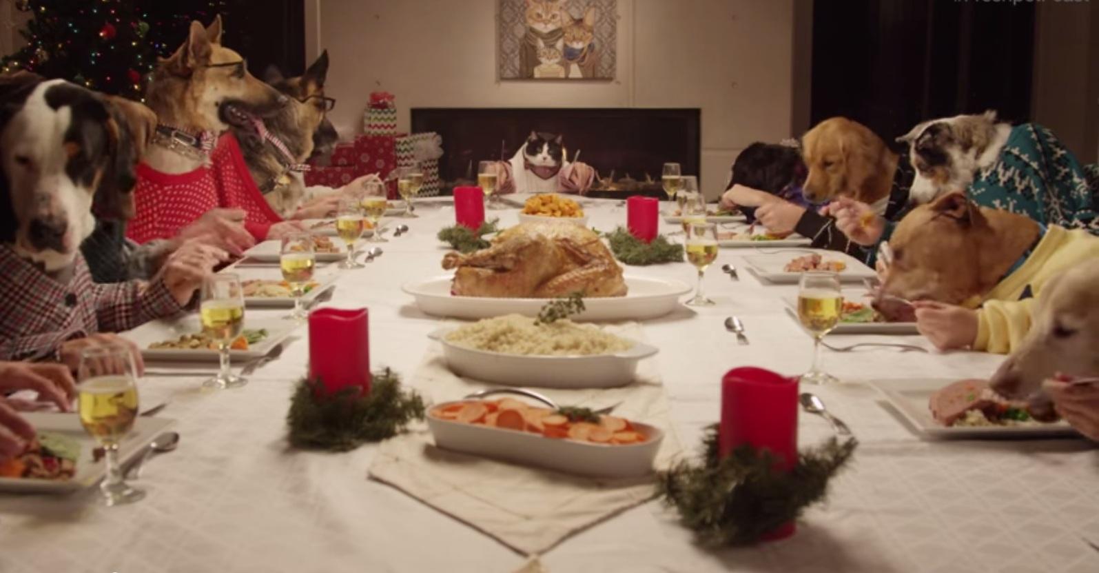VIDEO: La última cena de 13 perros y un gato que se vuelve viral en Internet