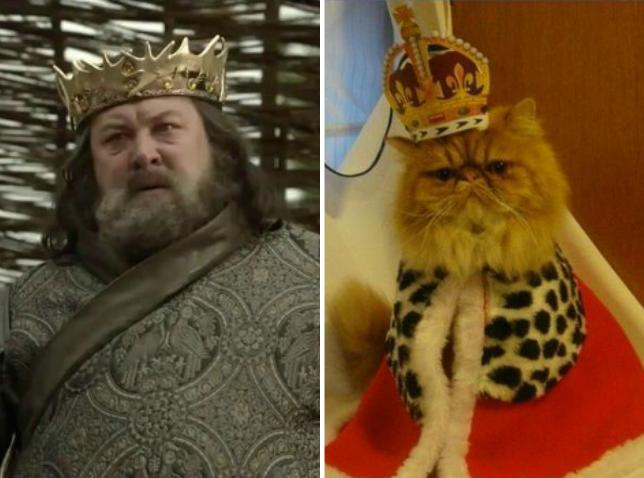 FOTOS: 12 gatos idénticos a los personajes de 'Game of Thrones'
