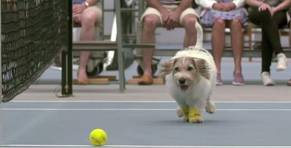 VIDEO: tiernos perros 'recogebolas' en partido de tenis son furor en las redes