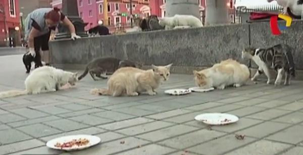Denuncian que Municipio de Lima pretendería desaparecer gatos del Parque Universitario