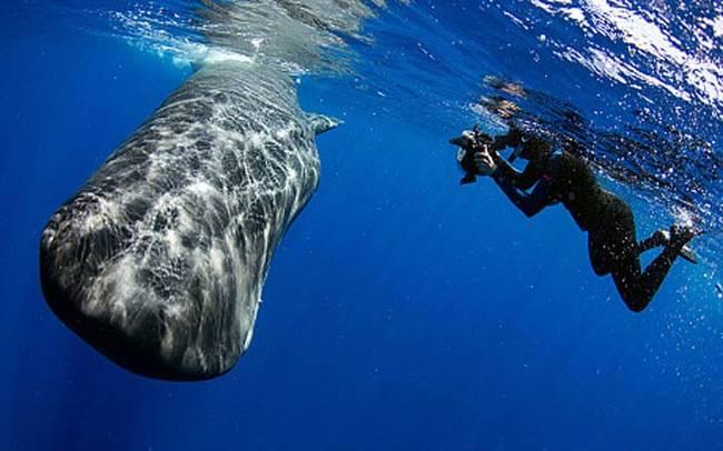 FOTOS: no vas a creer lo que hizo esta ballena para ahuyentar a un grupo de buzos