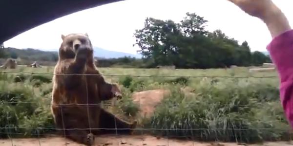YouTube: conoce al oso que se despide tiernamente de las personas
