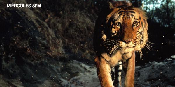 La verdadera lucha animal por la supervivencia en un espectacular documental