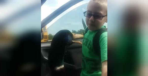 YouTube: tierna amistad entre un pato y un niño enternece a internautas