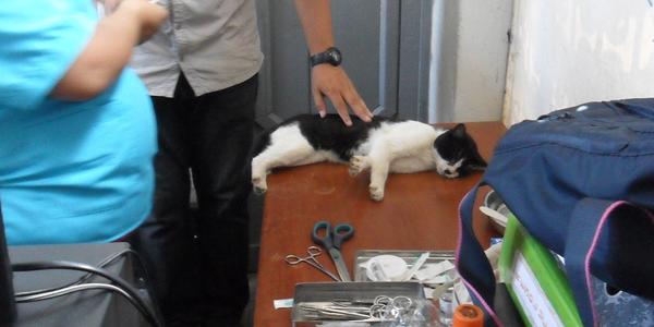 Gatos del Parque Universitario fueron sometidos a control sanitario por la MML
