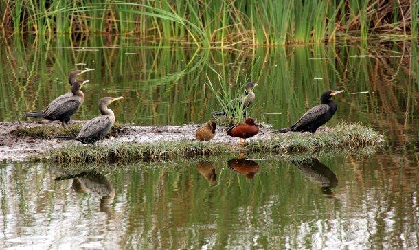 Chorrillos: siembran 20 mil árboles para proteger Pantanos de Villa