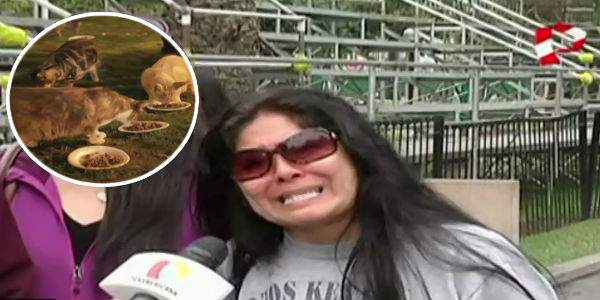 Miraflores: defensores de los animales se enfrentan a policías por gatos del Parque Kennedy