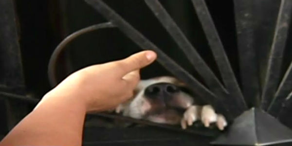 Niño es víctima de ataque de perro pitbull en La Victoria