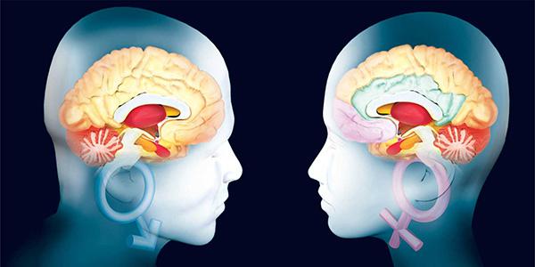 ¿Realmente existen diferencias entre el cerebro de un hombre y una mujer?