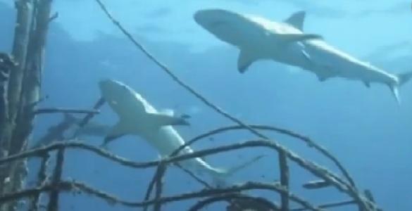 Bañistas preocupados por aparición de raras especies en el mar