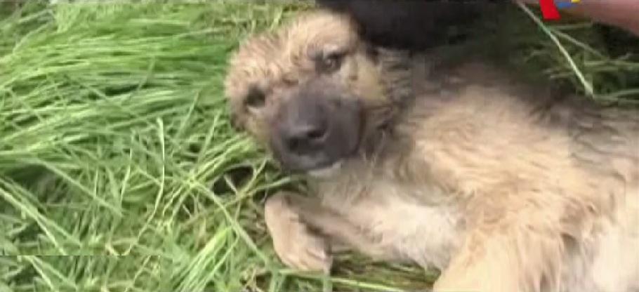 Huancayo: policías rescatan a perro que estaba a punto de caer al río