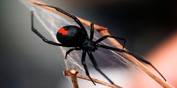 FOTOS: 5 datos curiosos sobre las arañas que nunca habrías imaginado