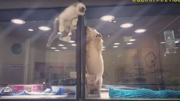 Pequeño gatito realiza escape de película para ir a jugar con su vecino