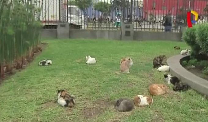 Aumenta número de gatos abandonados en Parque Universitario