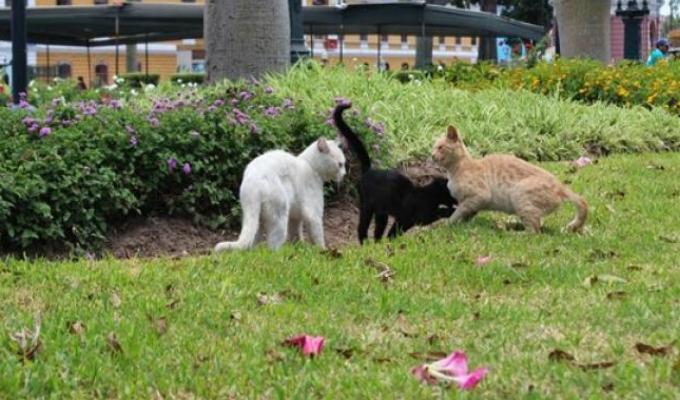 Cercado de Lima: promueven adopción de gatos en Parque Universitario