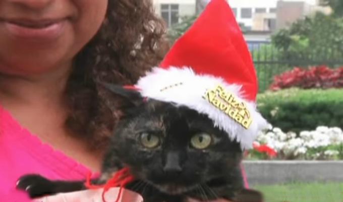 Al menos 40 gatos del Parque Universitario fueron dados en adopción