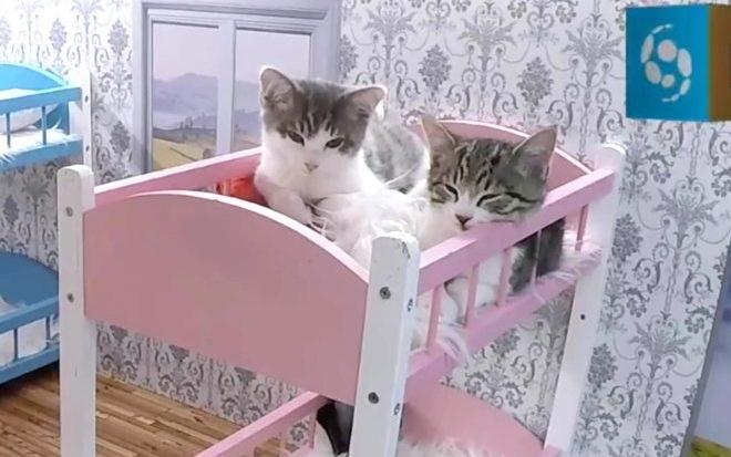 """Keeping Up With The Kattarshians"": el primer reality de gatos que es furor"