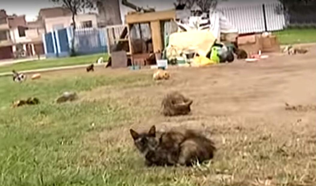 Ate: vecinos enfrentados por parque invadido por gatos
