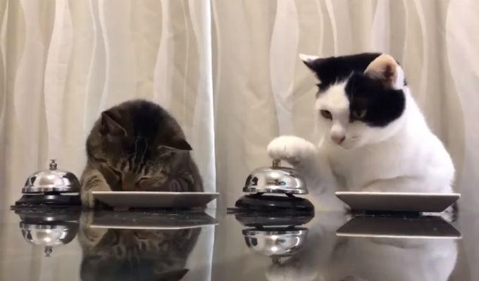 [VIDEO] Estos gatos son muy educados a la hora de almorzar