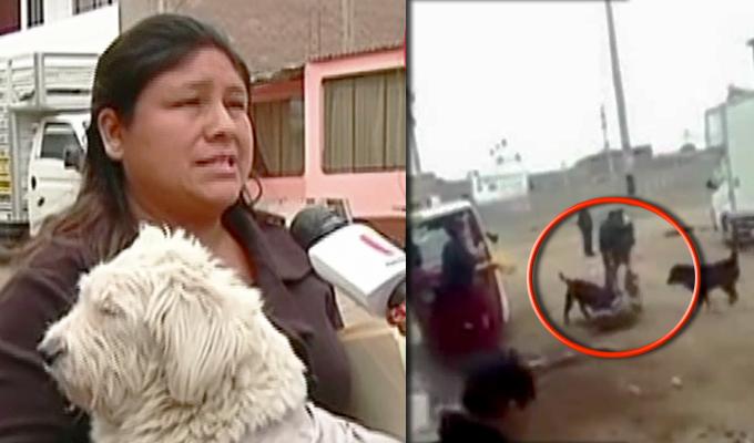 Villa El Salvador: vecinos denuncian que viven atemorizados por feroz perro de raza pitbull