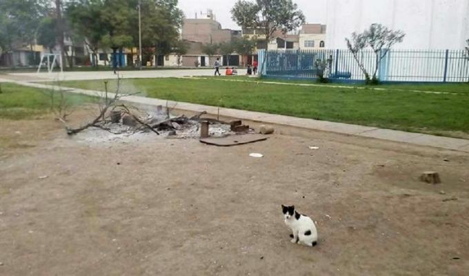 Ate: vecinos responsabilizan a municipio por quemar vivos a gatos