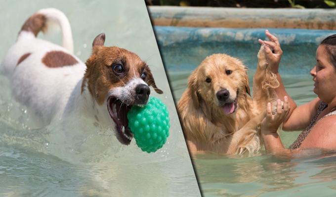 Brasil: abren primer parque acuático exclusivo para perros
