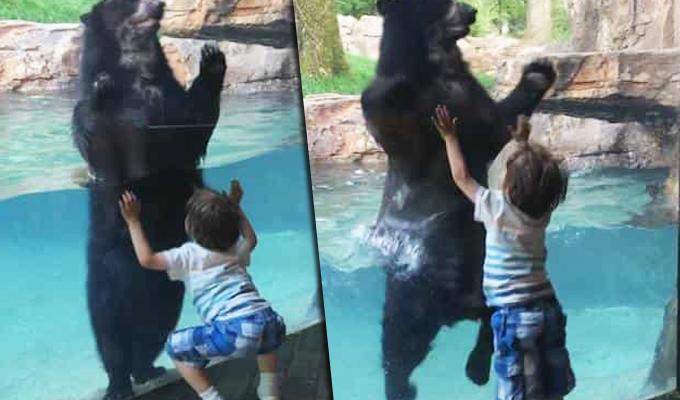 EEUU: oso causa sensación por brincar junto a niño de cinco años