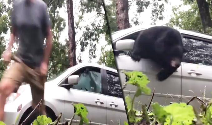 EEUU: familia encuentra un oso hambriento dentro de su vehículo